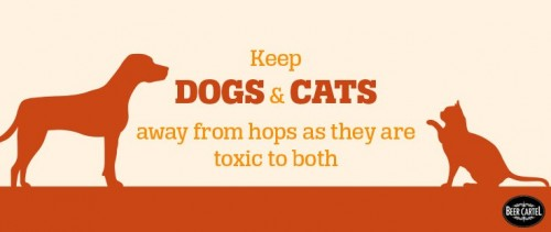 keep pets away from hops
