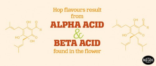 hop flavors come from